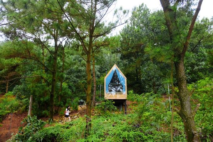 Nhà Gỗ 12m2 Nằm Chơi Vơi Giữa Đồi Thông Tại Hà Nội